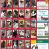 National Pet Month Vote for Westbury's Cutest Pet!